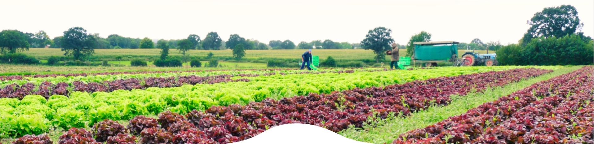 Landwirte bei der Arbeit auf dem Feld